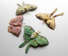 Textile moths   Flickr - Photo Sharing!