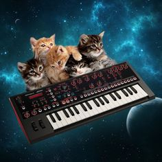5 voice kitten polyphony... Cats On Synthesizers In Space