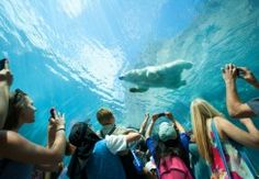 Get nose to nose with polar bears, seals and other arctic species at Journey to Churchill, visit the other animals at the zoo and do some shopping at the gift shop Winnipeg Art Gallery, Urban Park, Historical Artifacts, Win A Trip, Churchill, Dream Vacations, Arctic, Trip Planning, Tourism