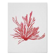 Red Seaweed Art Print No.1 Beach Decor