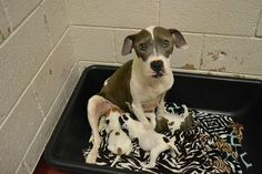 After being found abandoned under a Georgia home, Matilda and her pups need donations to save them