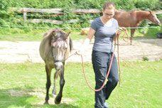 Nieuwsgierig wat precies maakt dat hulpverlening met behulp van paarden werkt? Dat kun je lezen in mijn nieuwe blog!