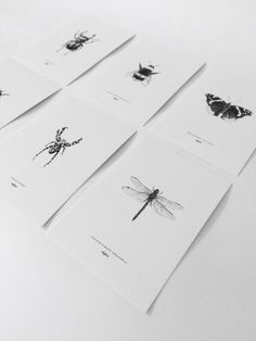 Set of 6 (A6) cards with drawings of the dragonfly, bumblebee, ladybug, stag beetle, spider (actually not an insect but an arthropod) and the red admiral butterfly.    The illustrations are hand drawn by inkylines.