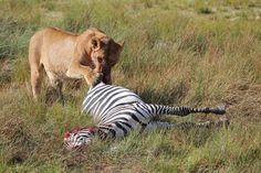 8-Days The Best of Kenya Wildlife Safari | Moonlight Tours Expedition | Pulse | LinkedIn