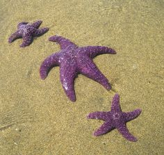 starfish on bottom is perfect!