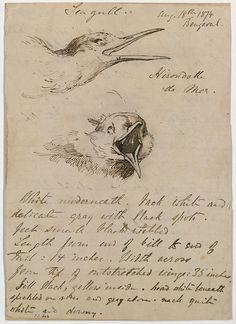 John Singer Sargent, Seagull,  1874
