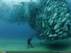Amazing photo of a school of jacks around the diver. I love diving!
