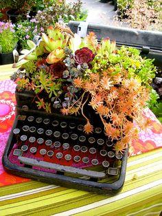 Old Typewriter as a succulent planter Succulent Centerpieces, Succulent Arrangements, Cacti And Succulents, Planting Succulents, Artificial Succulents, Succulent Gardening, Container Gardening, Echeveria, Pot Plante