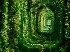 Tunnel of Love, Ukraine  http://www.boredpanda.com/train-love-tunnel-ukraine/