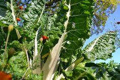Skillnadens Trädgård: TRÄDGÅRDSLASAGNE Stuffed Peppers, Vegetables, Flowers, Plants, Mat, Food, Backyard Farming, Lasagna, Stuffed Pepper