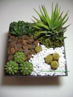 Saiba como montar um mini jardim de cactos e suculentas - Jardim das Ideias…