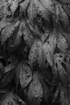 Dew drops on leaves, organic texture inspiration