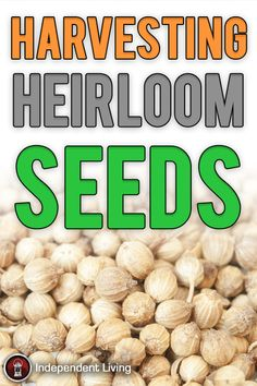 A Do-It-Yourself Guide to Harvesting Heirloom Seeds Emergency Planning, Survival Prepping, Garden Tips, What Is Life About, Food Preparation, Homesteading, Meal Prep, Harvest, Seeds