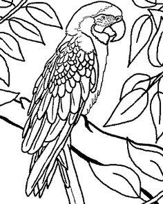 46 meilleures images du tableau coloriage perroquet coloring pages coloring books et - Perroquet en dessin ...