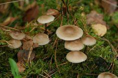 #Paddestoel #mushroom