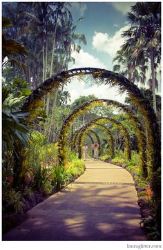 At the Orchid Garden, in Singapore Botanic Gardens