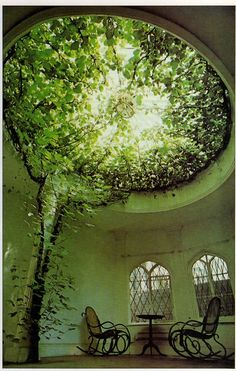 ficus trees filling the glass dome of what was once a chapel
