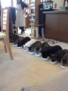 あごひげ海賊団 : 猫カフェ店員の食事休憩風景が癒される