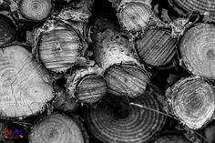 16/365 Woodlogs