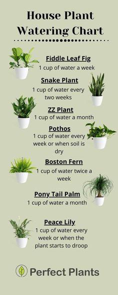 Diy Garden, Garden Projects, Indoor Garden, Lawn And Garden, Garden Beds, Best Indoor Plants, Indoor House Plants, Indoor Plant Decor, Big House Plants