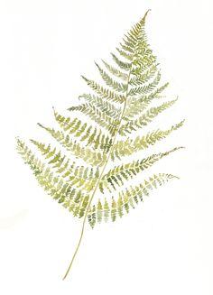 fern botanical illustration black and white - Google Search