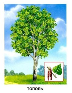 Обучающие карточки - Деревья Montessori Materials, Learning Environments, National Parks, Wall, Plants, Painting, Naturaleza, Animales, Speech Language Therapy
