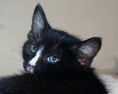 Cats & Kittens | MUFFIN  petprojectfoundation.org