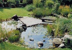 10 étang plantes miniteich Assortiment 5 différents