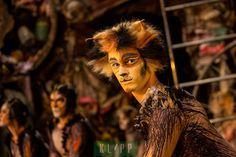 CATS - Pouncival