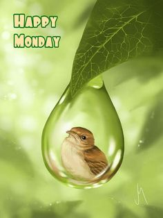 Happy Monday