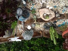 My Succulent Garden In San Diego, Just Planted 4/2013, #beach Decor