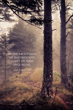"""""""In the backwoods of nature's soul I left my wild true heart."""" soulful quote about nature and heart in a misty forest setting…Ales Krivec, photographer Wild Quotes, Soul Quotes, Happy Quotes, Quotes About Soul, Peace Quotes, Spiritual Quotes, Quotes Quotes, Qoutes, Peace In Hindi"""