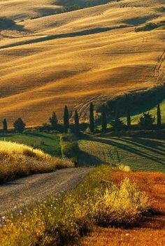 Golden Seas of Tuscany Beautiful Landscapes, Travel Pictures, The Great Outdoors, Tuscany, Vineyard, Wanderlust, Country Roads, Europe, Ocean