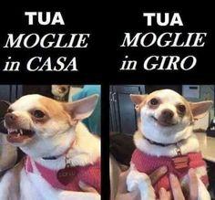 MOMENTO POP - MASCHILISMO