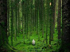 Hiker, Scottish Highlands by Luis del Río (by NatGeo*)