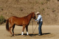 Teaching Your Horse to Ground Tie