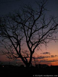 Y representada en un árbol