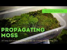 Moss Garden, Green Garden, Moss Terrarium, Terrariums, Growing Moss, Outside Plants, Japanese Garden Design, Water Gardens, Fairy Gardens