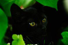 ..Czarnula..Black cat
