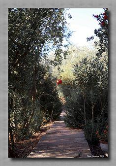 The last pomegranate