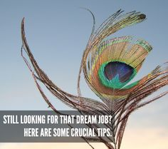Still Looking for that Dream Job? Here are Some Crucial Tips.