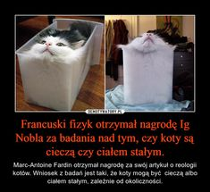 Cat Memes, Funny Memes, Jokes, Reaction Pictures, Funny Pictures, Polish Memes, Pretty Animals, Baby Cats, Wtf Funny