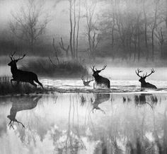 Reflections of deer crossing a stream in winter