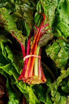 Kale Thinks It's a Big Deal. Let's Eat Swiss Chard Instead. — Ingredient Intelligence