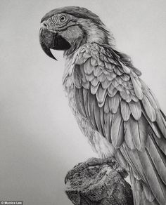 Illustration & Painting / Stunning Photo Realistic Graphite Drawings by Monica Lee portraits photorealism hyperrealism graphite Pencil Drawings Of Animals, Realistic Pencil Drawings, Pencil Drawing Tutorials, Graphite Drawings, Animal Sketches, Bird Drawings, Drawing Sketches, Drawing Ideas, Drawing Animals