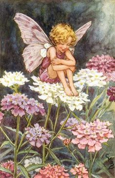 "Candytuft Flower Fairy Cicely Mary Barker, Illustrator from her book, ""Flower Fairies of the Summer"", 1925 Cicely Mary Barker, Flower Fairies, Fantasy Kunst, Fantasy Art, Fairy Dust, Fairy Tales, Fairy Land, Illustrator, Fairy Pictures"