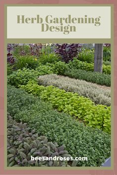 There is an art and a science to herb gardening design. Yes, they are beautiful but knowing a few tips also makes them more functional and productive. Read this post to learn more about design, indoor and outdoor herb gardening and more. Simple Garden Designs, Herb Garden Design, Diy Herb Garden, Herb Gardening, Vegetable Garden, Garden Ideas, Back Gardens, Outdoor Gardens, Vertical Herb Gardens