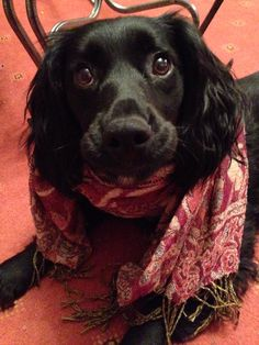 Just a dog in a scarf!!