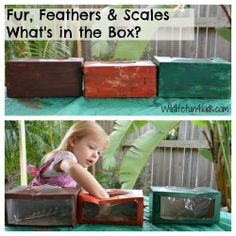 cover up, classroom, animals, sensory activities, boxes, fur feathers scales preschool, animal classification, anim classif, 4 kids