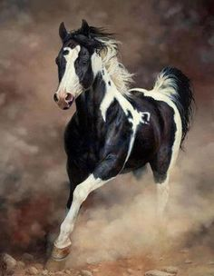Beautiful Horse running and kicking up the dust.